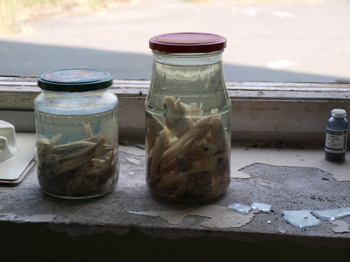 A jar in the ruins of a laboratory experimenting on fish in the Zone of Alienation. Photo: Juhana & Maria Pettersson